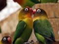 animals-h-c-377-480-7