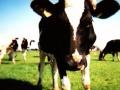animals-h-c-377-480-9