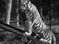animals-h-g-377-480-5
